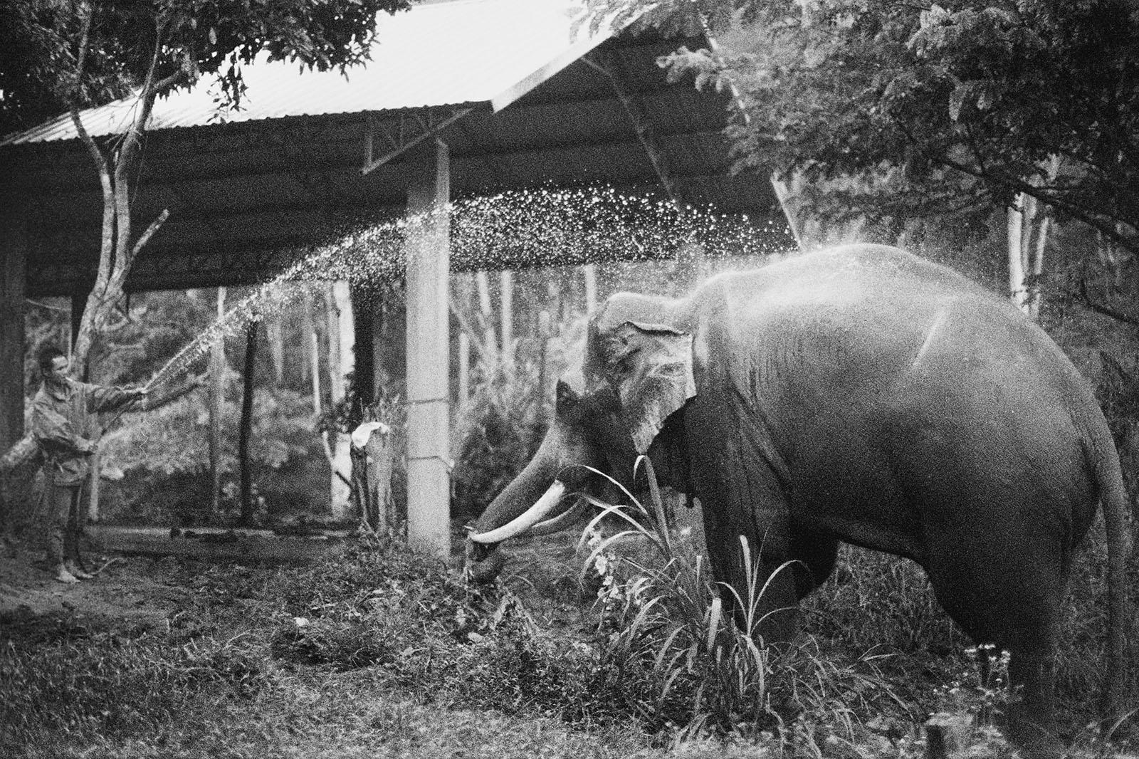 Elephants getting a morning bath at Chai Lai Orchid | Thailand Travel Photos