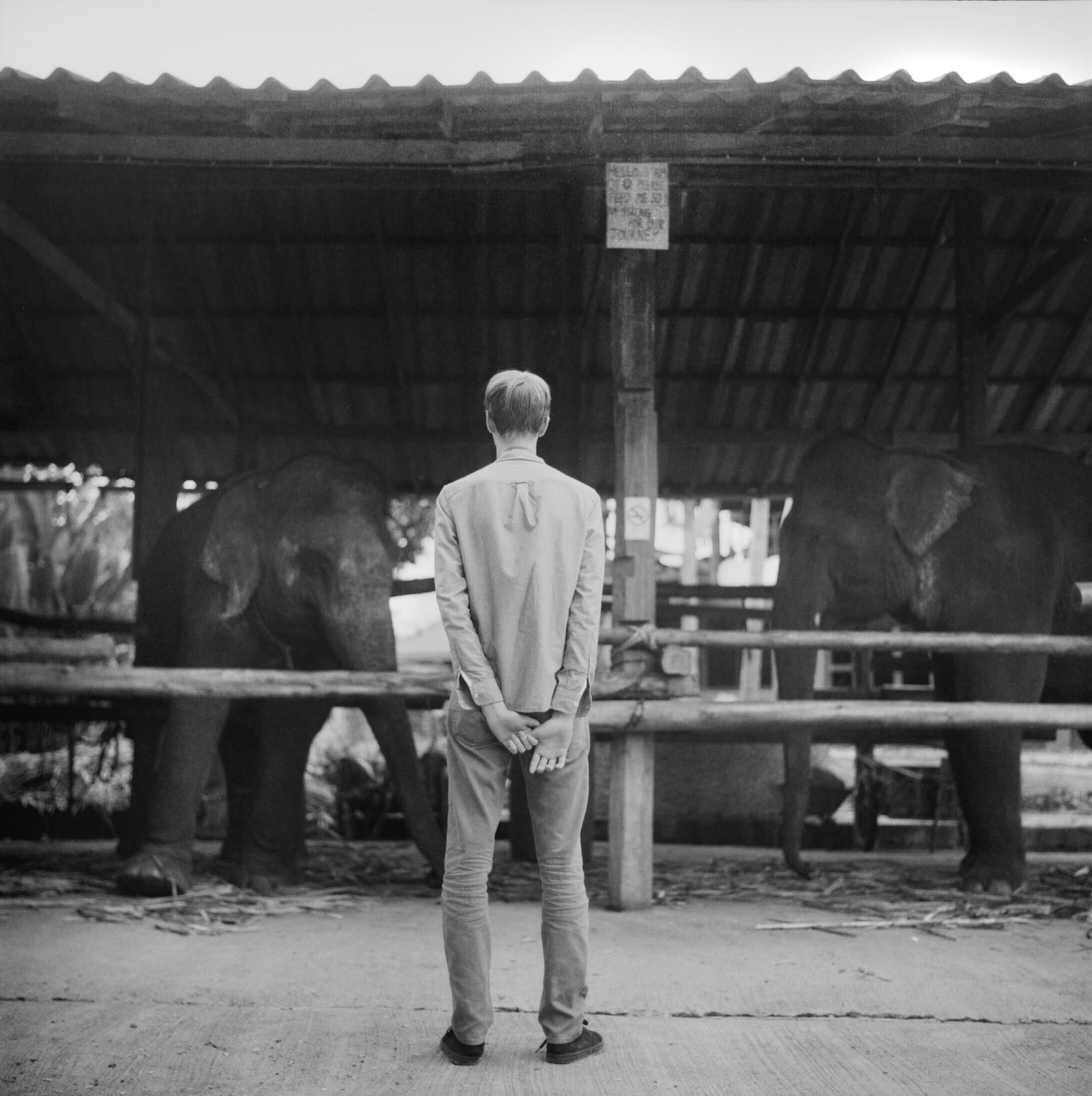 Visiting elephants in Pai | Thailand Travel Photos