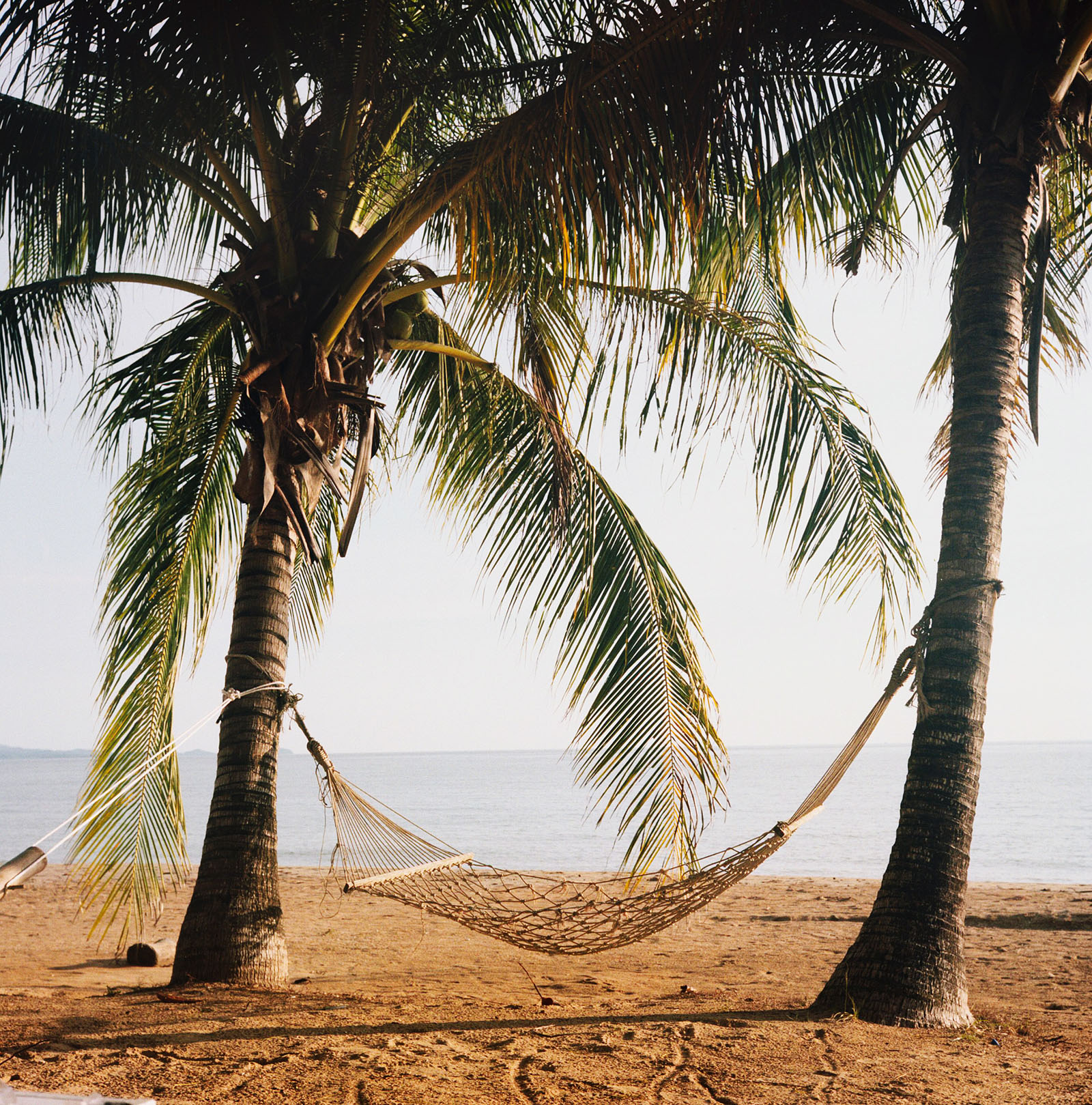 Hammock between palm trees at Baan Koh Mak | Thailand Travel Photos