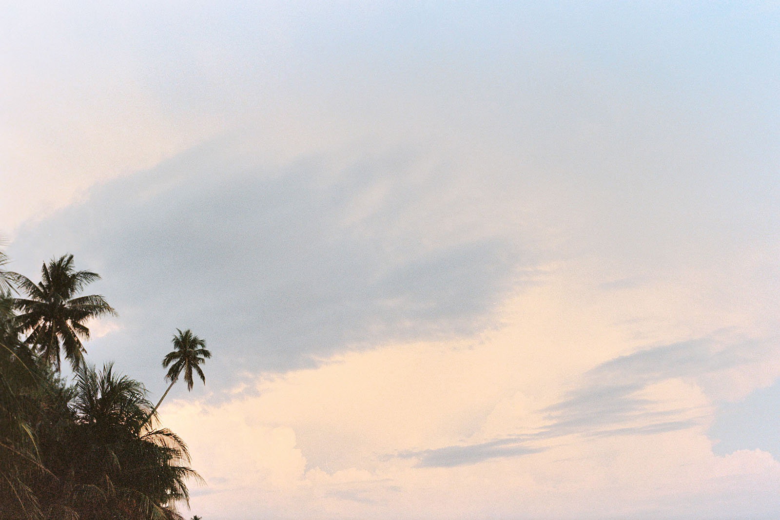 Palm trees at sunset on Koh Mak | Thailand Travel Photos