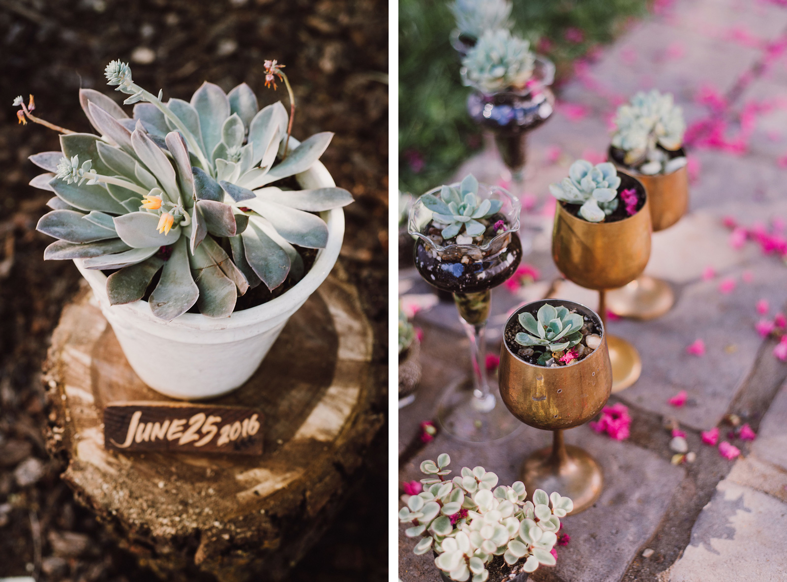 Succulent plant decorations | Backyard Chico California Wedding
