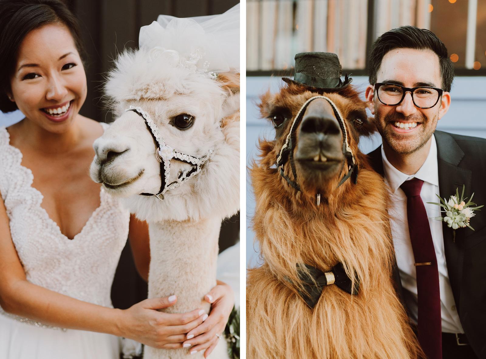Bride and Groom with wedding llamas, Rojo and Napoleon | Portland Castaway Wedding