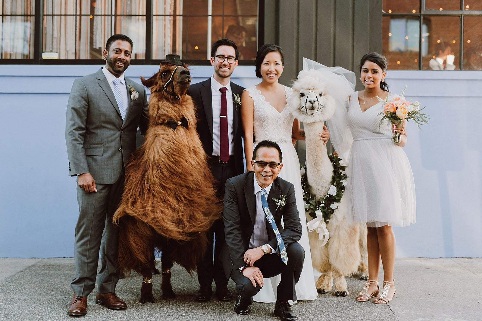 Wedding party posing with Rojo and Napoleon the llamas | Portland Castaway Wedding
