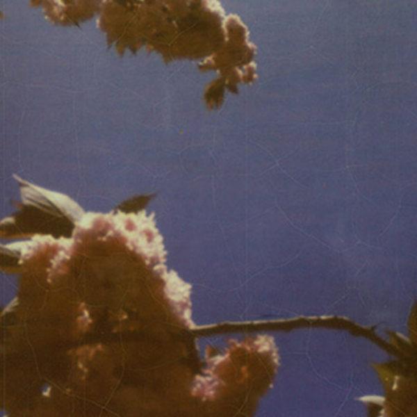 Spring in Humboldt