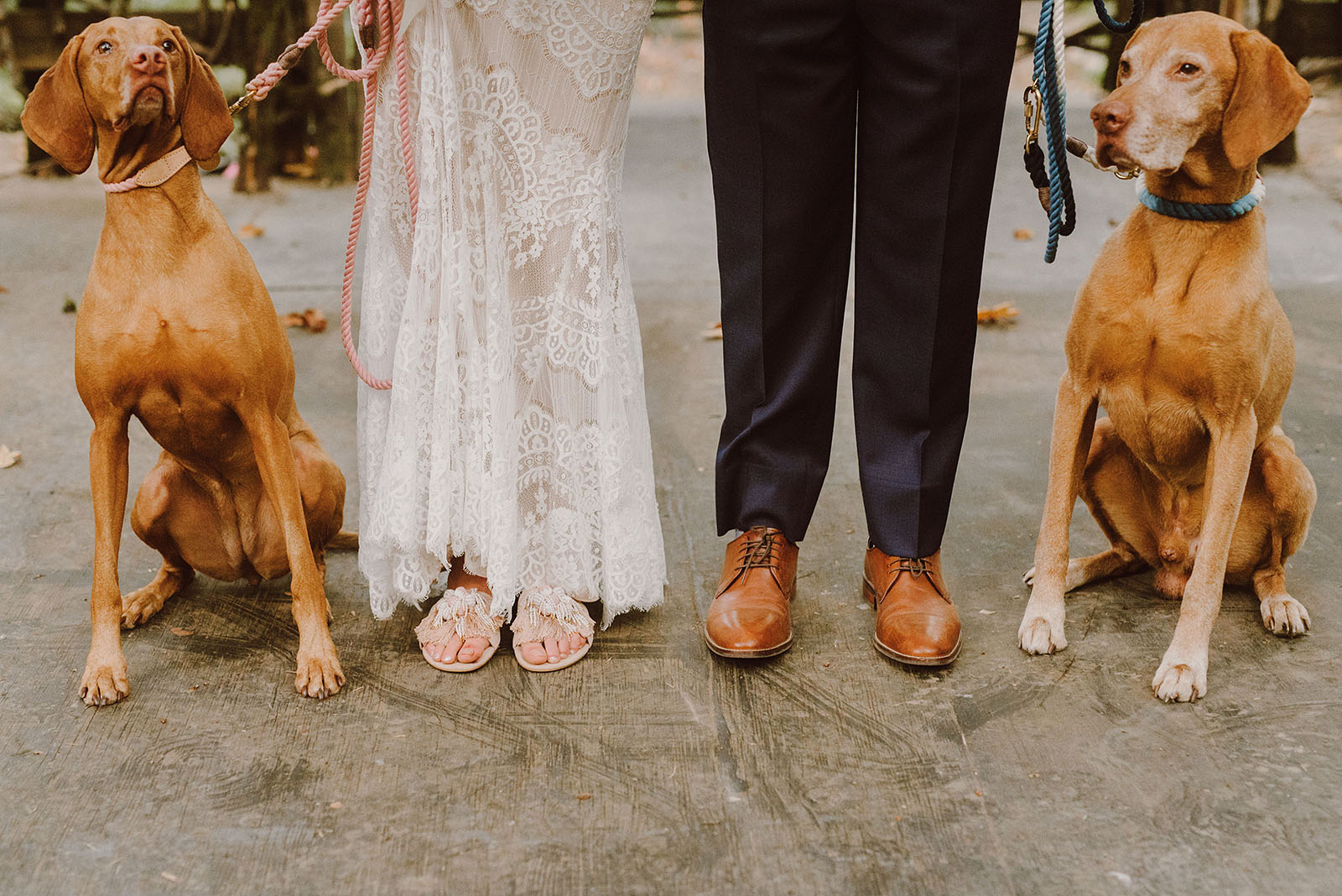 portrait of the bride and groom with their dogs - portland wedding photography